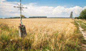 Przekazywanie ziemi rolnej z zasobu Skarbu Państwa mniejszościowym kościołom i innym związkom wyznaniowym na tzw. Ziemiach Zachodnich i Północnych